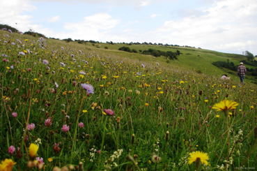 Arreton Downs Nature Reserve - Credit: Chris Archbold