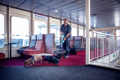 Dogs on board Wightlink's St Faith ferry