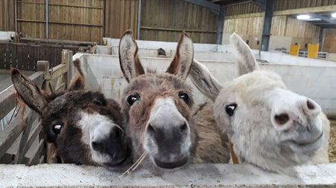 Donkeys at Isle of Wight Donkey Sanctuary