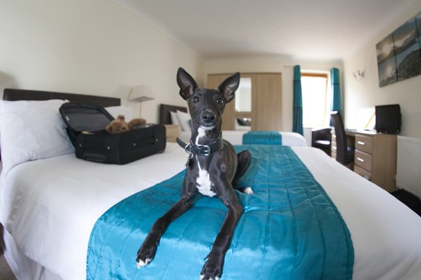 Dog in Isle of Wight hotel