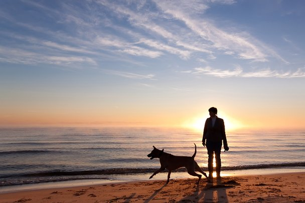 Dog with owner on beach at sunset